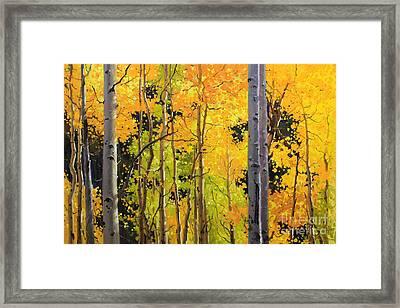 Aspen Trees Framed Print by Gary Kim
