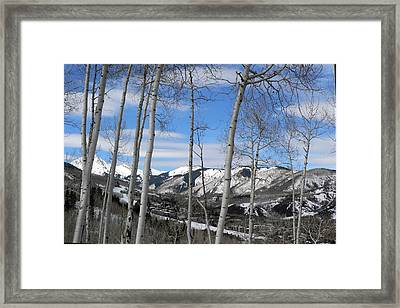 Aspen Trees In Snowmass Framed Print
