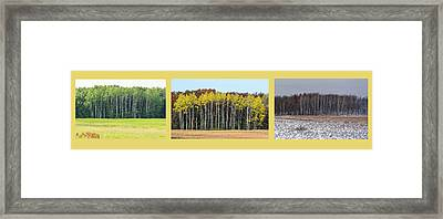 Aspen Triptych Framed Print
