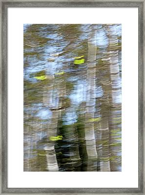 Aspen Twist Framed Print