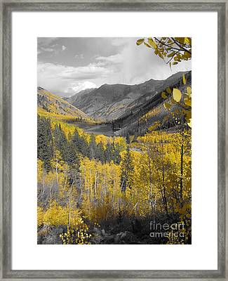 Aspen Valley In Fall Framed Print by Jeff White