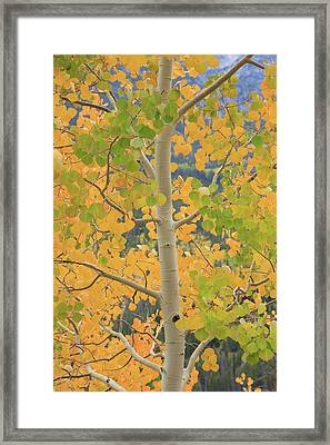 Aspen Watching You Framed Print