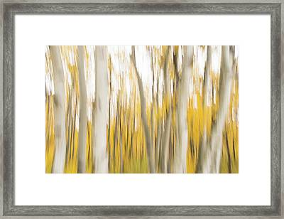 Framed Print featuring the photograph Aspens 2 by Alex Lapidus