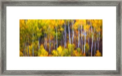 Aspens Alive Framed Print