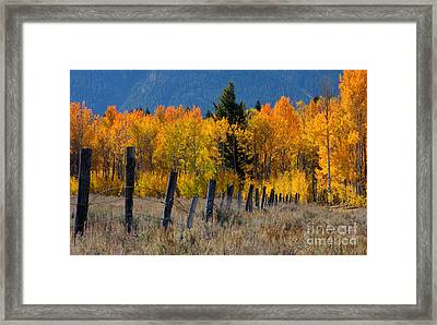 Aspens And Fence Framed Print