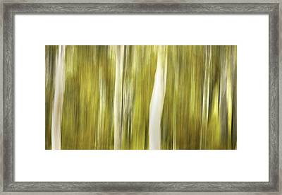 Aspens And Golden Foliage Abstract Framed Print