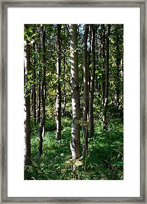 Framed Print featuring the photograph Aspens And Shadows by Marilynne Bull