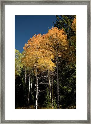 Framed Print featuring the photograph Aspens And Sky by Steve Stuller