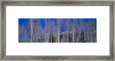 Aspens Az Framed Print by Panoramic Images