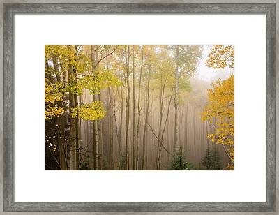 Aspens In Autumn 10 - Santa Fe National Forest New Mexico Framed Print