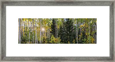 Aspens In Autumn 5 Panorama - Santa Fe National Forest New Mexico Framed Print