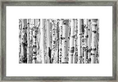Framed Print featuring the photograph Aspens In Black And White  by Saija Lehtonen