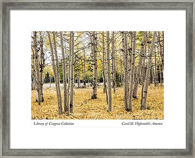 Framed Print featuring the photograph Aspens In Conejos County In Colorado, Near The New Mexico Border by Carol M Highsmith