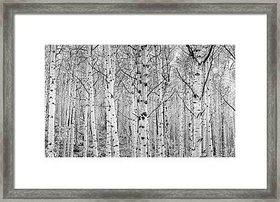 Aspens In High Key Framed Print by John De Bord