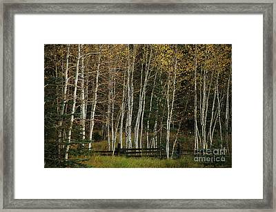 Aspens In The Fall Framed Print by Timothy Johnson