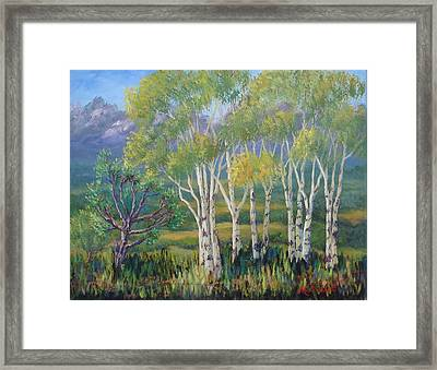 Aspens In The Rockies Framed Print by Maxine Ouellet