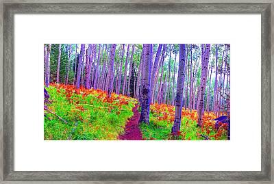 Aspens In Wonderland Framed Print