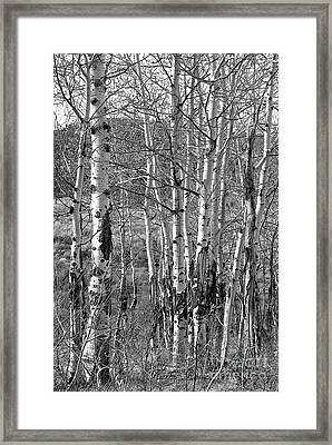 Aspens Framed Print by Kathy Russell