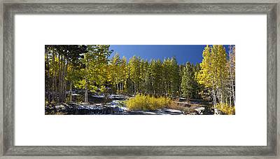 Framed Print featuring the painting Aspens by Larry Darnell