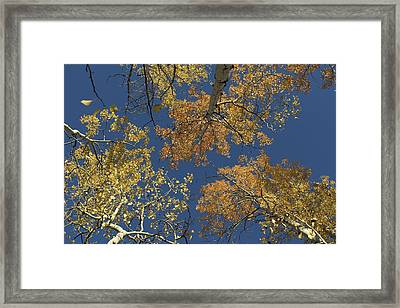 Framed Print featuring the photograph Aspens Looking Up by Mary Hone