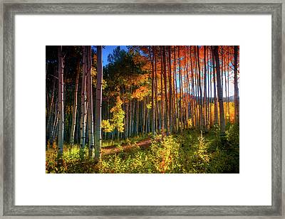 Framed Print featuring the photograph Aspens Of The West Elk Mountains by John De Bord