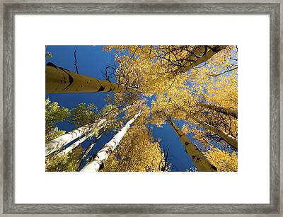 Framed Print featuring the photograph Aspens Up by Steve Stuller