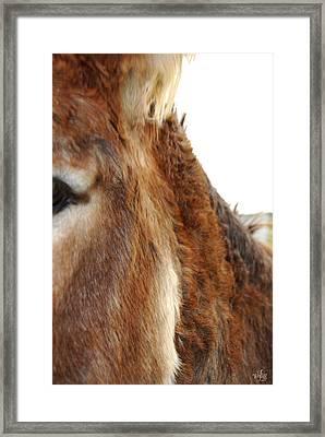 Ass Framed Print by Thea Wolff