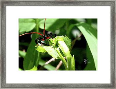 Assassin Bug Framed Print