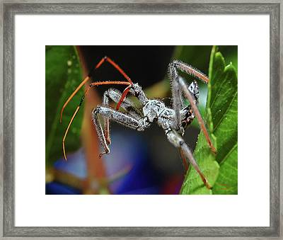 Assassin Nymph Framed Print by DigiArt Diaries by Vicky B Fuller