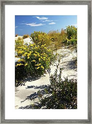 Assateague Beach 5 Framed Print by Alan Hausenflock
