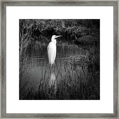 Assateague Island Great Egret Ardea Alba In Black And White Framed Print