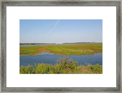 Assateague Island Framed Print by Gregory Smith
