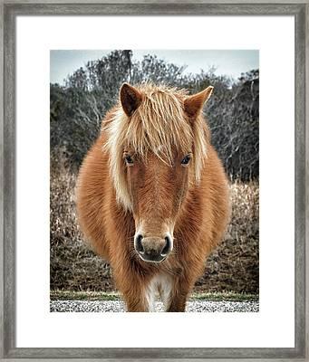 Assateague Island Horse Miekes Noelani Framed Print