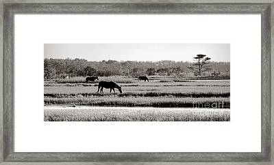 Assateague Framed Print by Olivier Le Queinec