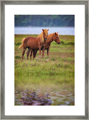 Assateague Ponies In The Marsh Framed Print by Rick Berk