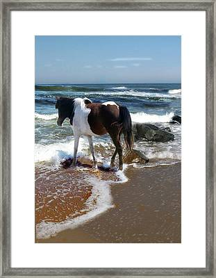 Assateague Pony Framed Print