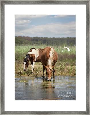 Assateague Pony Pair Framed Print
