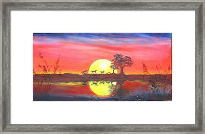 Assateague Run Framed Print by Dawn  Johansen