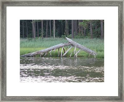 Framed Print featuring the photograph Assawoman Tree by Kevin Callahan