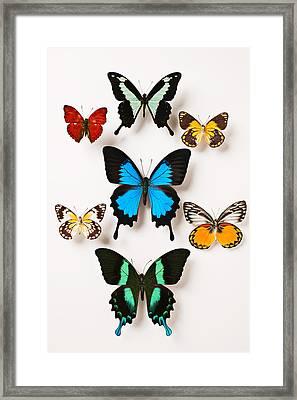 Assorted Butterflies Framed Print by Garry Gay