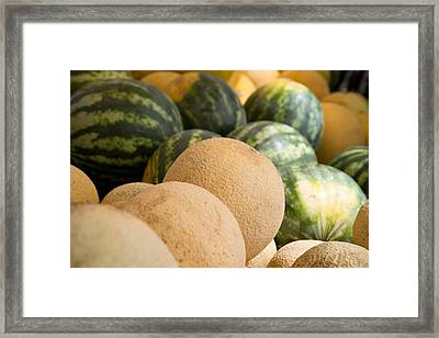 Assortment Of Melons Framed Print by Dina Calvarese