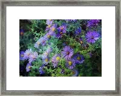 Aster 4468 Idp_2 Framed Print