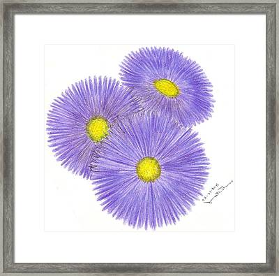 Aster Alpinus Framed Print by James M Thomas
