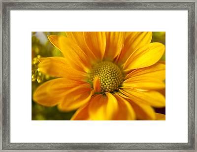 Aster Close Up Framed Print
