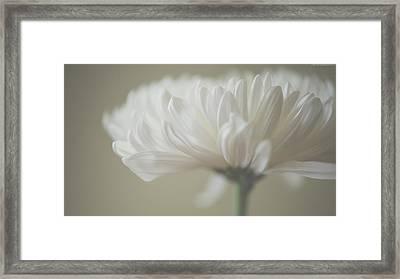 Aster Framed Print