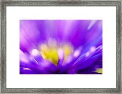Aster Flower Framed Print by Silke Magino