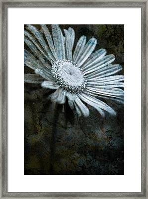 Aster On Rock Framed Print by  Onyonet  Photo Studios