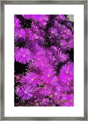 Asters At North Conway Framed Print by Paul Meinerth