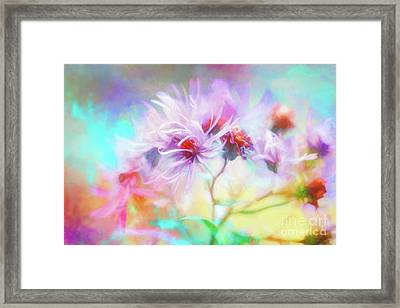 Asters Gone Wild Framed Print