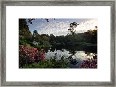 Asticou Azalea Garden Framed Print by Juergen Roth
